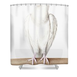 Albino Crow Shower Curtain by Nicolas Robert