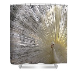 Pure White Peacock Shower Curtain