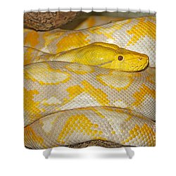 Albino Reticulated Python Shower Curtain