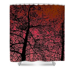 Alder Trees Against The Winter Sunrise Shower Curtain