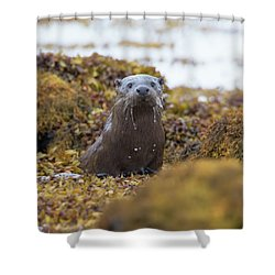 Alert Female Otter Shower Curtain