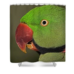Alexandrine Parakeet Shower Curtain