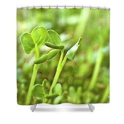 Alfafa Shower Curtain