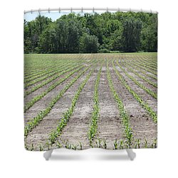 Alien  Crop Lines Shower Curtain