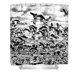 Shower Curtain featuring the photograph All A Flutter by Joseph Hollingsworth