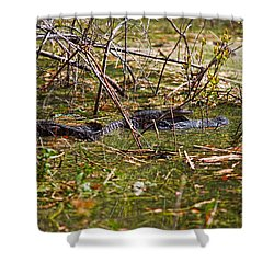 All Aboard Shower Curtain by Christopher Holmes
