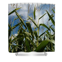 All About Corn Shower Curtain
