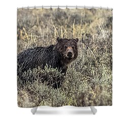 Shower Curtain featuring the photograph All Alone by Yeates Photography