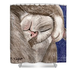 All Curled Up Shower Curtain by Terry Taylor