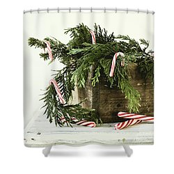 Shower Curtain featuring the photograph All Dressed Up by Kim Hojnacki