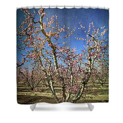 All Good Things Shower Curtain by Laurie Search