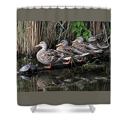 All In A Row Shower Curtain by Doris Potter