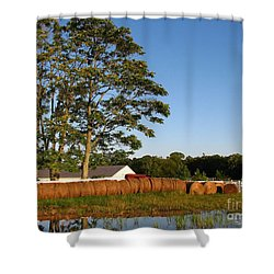 All In A Row Shower Curtain by Todd A Blanchard