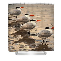 All Lined Up Shower Curtain by Susanne Van Hulst