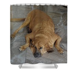 All Pooped Out Shower Curtain by Val Oconnor