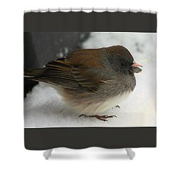 All Puffed Up Shower Curtain by Sheila Brown