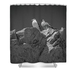 Shower Curtain featuring the photograph All Quiet On The Western Front by Samuel M Purvis III
