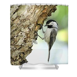 Shower Curtain featuring the photograph All Textured Up by Anita Oakley