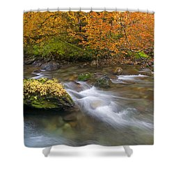 All That Is Gold Shower Curtain by Mike  Dawson