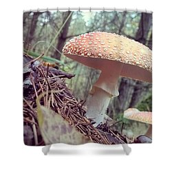 Alle Unter Einem Hut.  #mushrooms Shower Curtain