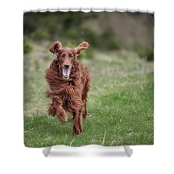 Allegro's March Shower Curtain