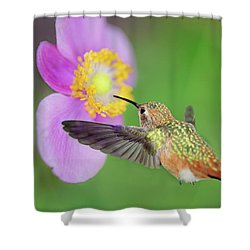 Allens Hummingbird And Anemone Shower Curtain