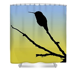 Allen's Hummingbird Silhouette At Sunrise Shower Curtain