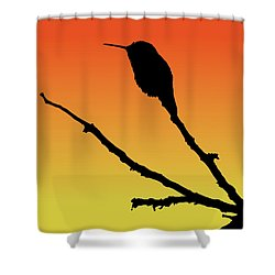 Allen's Hummingbird Silhouette At Sunset Shower Curtain