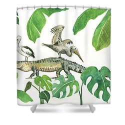 Alligator And Pelicans Shower Curtain by Juan Bosco
