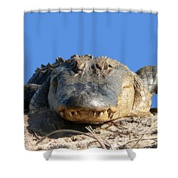 Shower Curtain featuring the photograph Alligator Approach .png by Al Powell Photography USA
