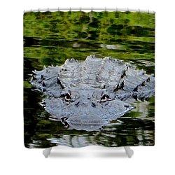 Alligator Approaching Shower Curtain by Rita Mueller