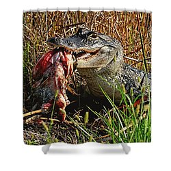 Alligator Eating A Fish Shower Curtain