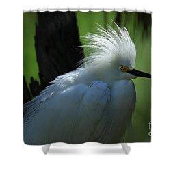 Shower Curtain featuring the photograph Alligator Farm Snowy Egret by Deborah Benoit