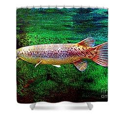 Alligator Gar Fish  Shower Curtain by Merton Allen