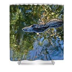 Alligator Stalking Shower Curtain