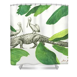 Alligator With Pelicans Shower Curtain by Juan Bosco