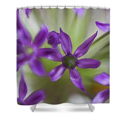 Allium Aflatunense Shower Curtain