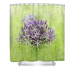 Allium Christophii Shower Curtain