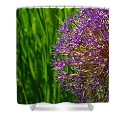 Allium Explosion Shower Curtain by Tim Good