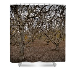 Almond Orchard Shower Curtain
