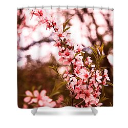 Almonds1 Shower Curtain