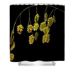 Along The Curve Shower Curtain