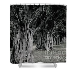 Along The Journey Shower Curtain
