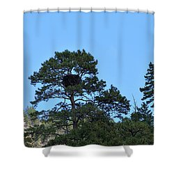Along The Missouri An Eagle's Nest In Pine Tree Shower Curtain