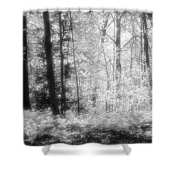 Along The Top Bw  Shower Curtain by Lyle Crump