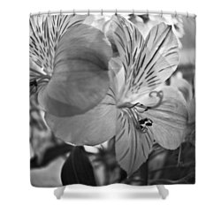 Alosteria 12 Shower Curtain by Simone Ochrym