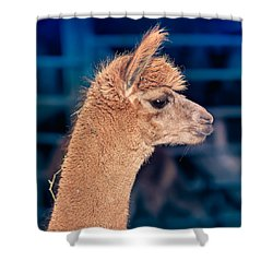 Shower Curtain featuring the photograph Alpaca Wants To Meet You by TC Morgan