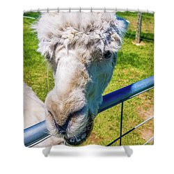 Alpaca Yeah Shower Curtain