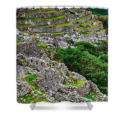 Alpacas At Machu Picchu Shower Curtain