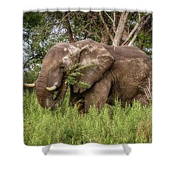Alpha Male Elephant Shower Curtain